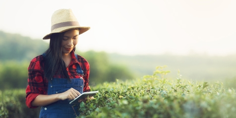 young woman is using a tablet while standing amidst crops at a farm